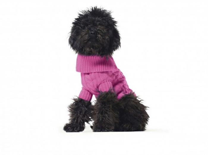 is-your-pet-sporty-or-posh-benetton-dog-sweater-2 Top 25 Breathtaking Dog Sweaters for Your Dog