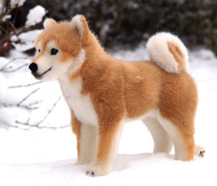kosen_09_dog_shiba-inu_5750 What is The Dog Breed Shiba Inu Puppies?