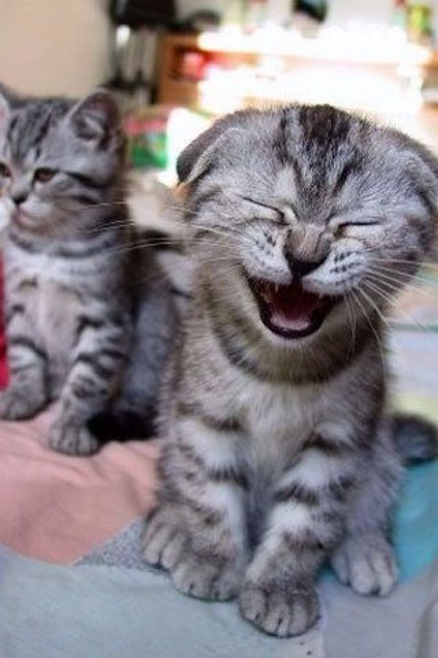 laughing-kitty-35910856 The Worst Times to Laugh... Take Care
