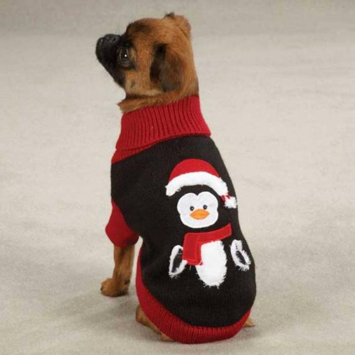 Зак-Зои-праздник-пингвин-собака-свитер-1