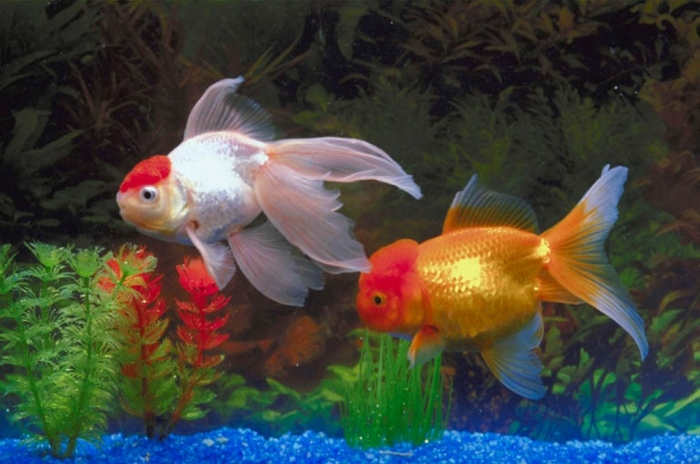 000802_c574_0020_csls What Are the Kinds of Fish You Can Put in Your Fish Tank?
