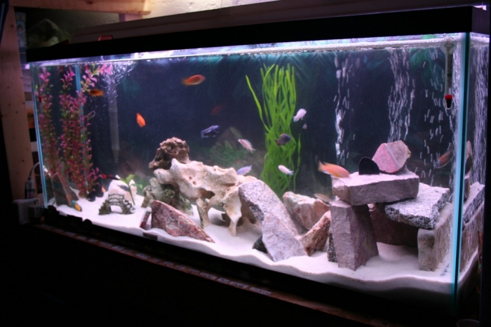 01_new_tank_011_cabe44e689db4a1e2996f35272ab1396 How to Decorate Your Boring Fish Tank