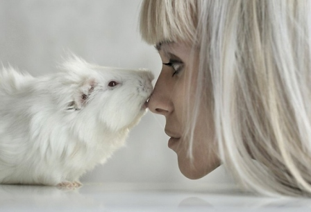 Photo of Why Are the White Rats Extremely Important?