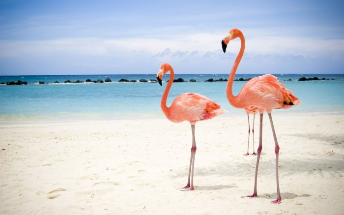 "1779099 Strange Facts about the Most Beautiful Bird on Earth ""Flamingo"""