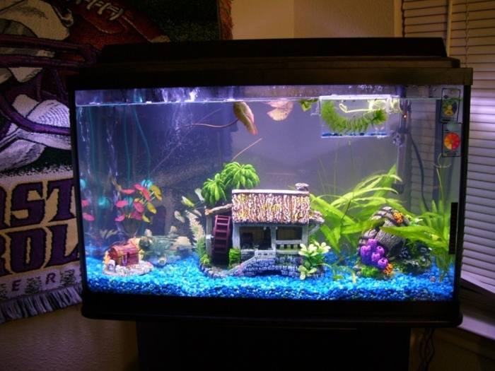 28954d1288668261t-fish-tanks-salt-fresh-000_0041 How to Decorate Your Boring Fish Tank