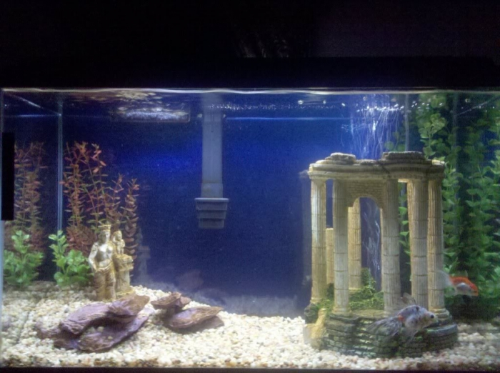 30557874 How to Decorate Your Boring Fish Tank