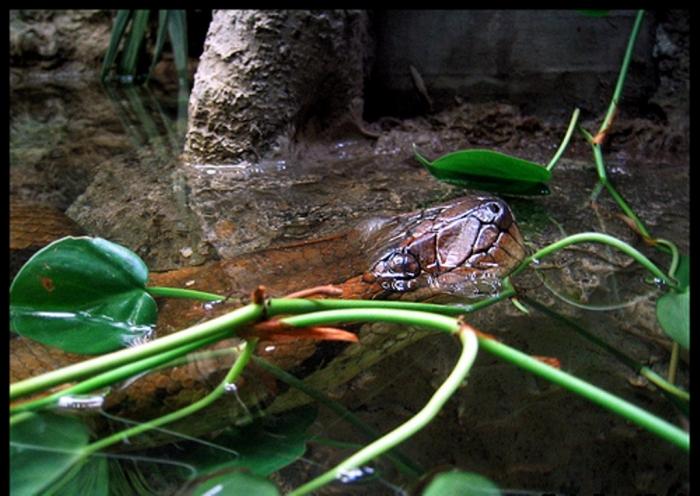 330764845_34a45d50e3 Unbelievable Facts You Don't Know about Anaconda