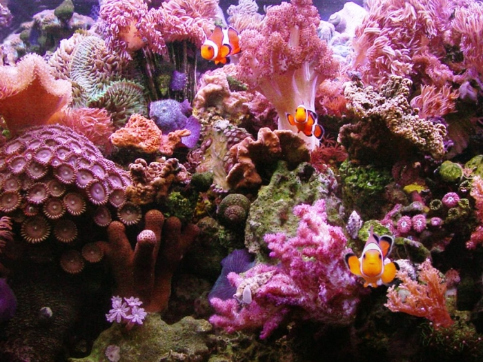 4598792356 What Is the Importance of the Magnificent Coral Reefs?
