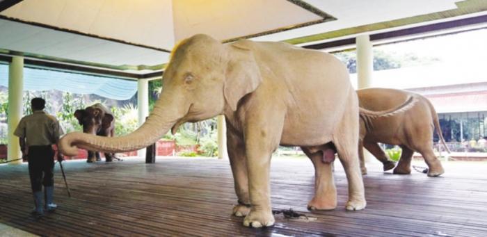 70e34869-1dae-4a53-950d-2192fbe5e100 The White Elephant Is Not a Legend