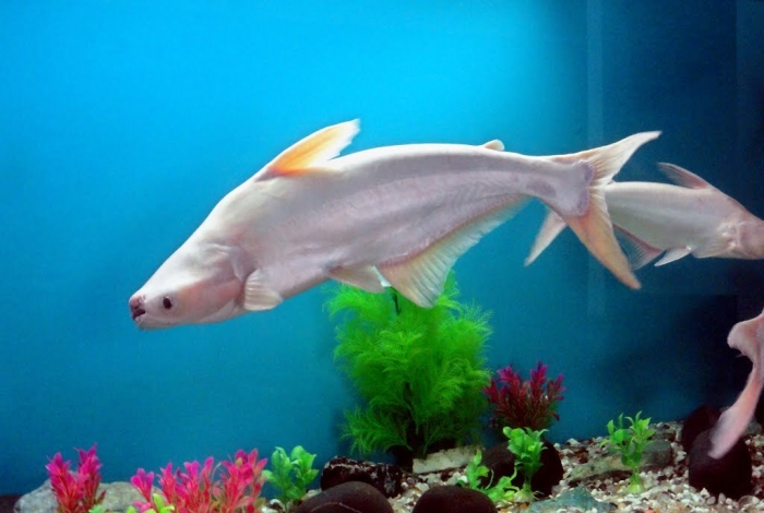 84341679 What Are the Kinds of Fish You Can Put in Your Fish Tank?