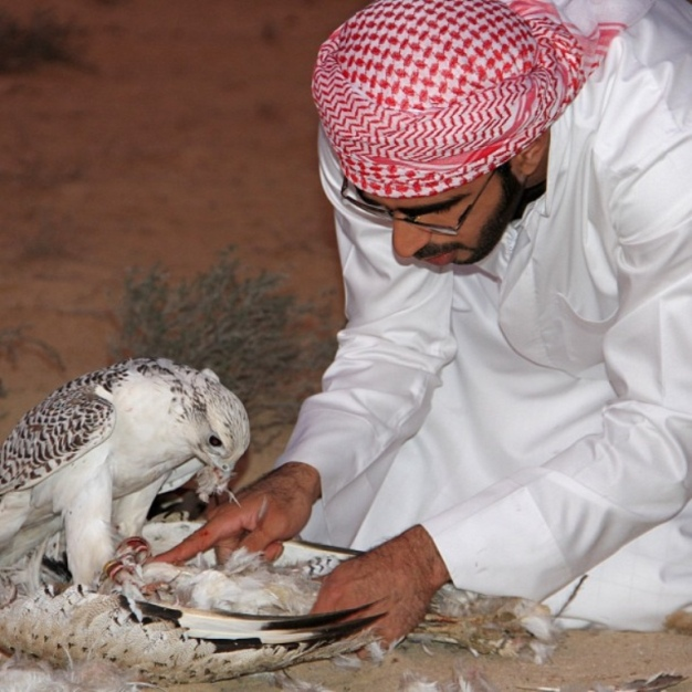 9249042526_a871320792_z Rare White Falcons You Have Never Seen Before