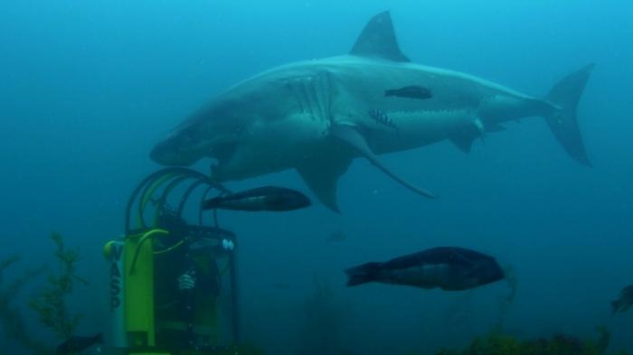 98e79040-1e5a-11e4-b85c-29cbb33d42bb_AirJawsFinOfFury_GiantGreatWhiteSharkAttackstheWASP_Online Is the Submarine Shark Real Or Just a Fake?