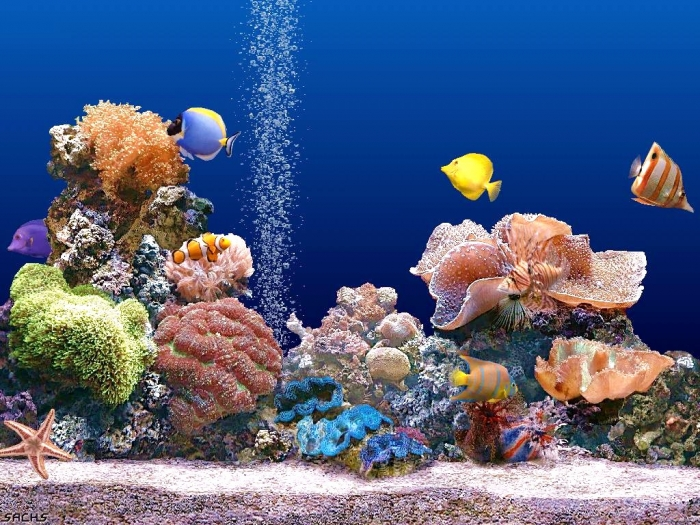 Beautiful-Coral-Reef-Photo-1156314c What Is the Importance of the Magnificent Coral Reefs?