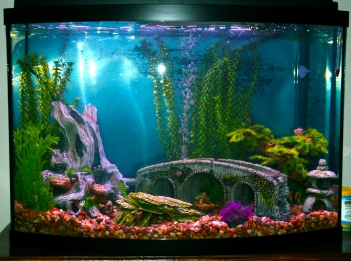How to decorate your boring fish tank pouted online for How to decorate fish tank