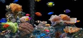 What Are the Kinds of Fish You Can Put in Your Fish Tank?