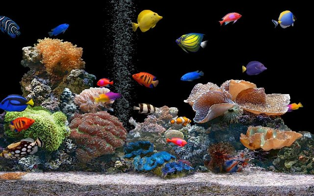 Photo of What Are the Kinds of Fish You Can Put in Your Fish Tank?