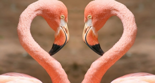 "Photo of Strange Facts about the Most Beautiful Bird on Earth ""Flamingo"""