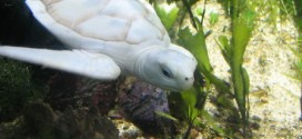 Do the White Turtles Really Exist on Earth?