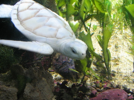 Photo of Do the White Turtles Really Exist on Earth?