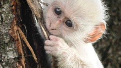 Photo of The Only White Monkey in the Whole World