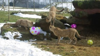 Photo of What Whipsnade Zoo Leaves Its Animals to Do!