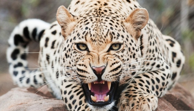 Photo of Is Cheetah Going to Be Extinct & Disappear from Our Life?