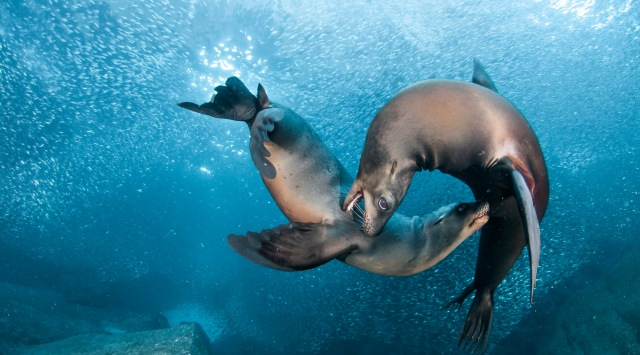 "Photo of Is It ""Sea Lions Or Sea Bears"" You Have to Decide"