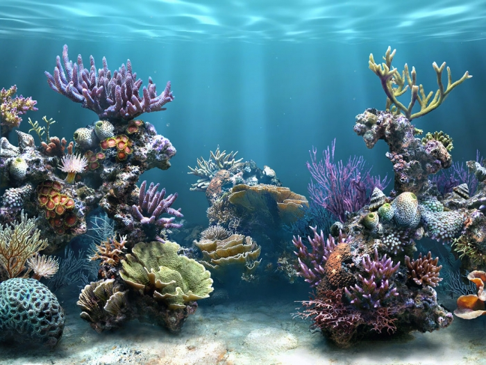 Coral-Reefs_wallpapers What Is the Importance of the Magnificent Coral Reefs?