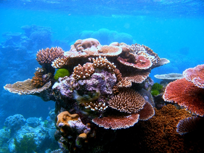Coral_Outcrop_Flynn_Reef What Is the Importance of the Magnificent Coral Reefs?