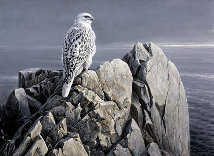 EveningLightWhiteGyrfalcon Rare White Falcons You Have Never Seen Before