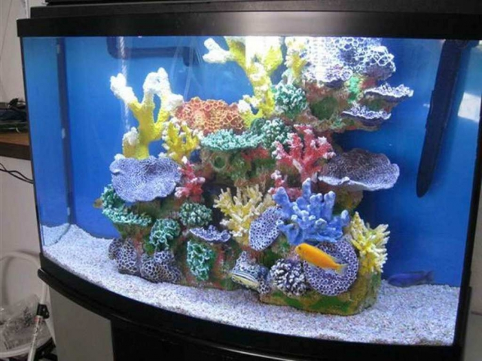 Fish-Tank-Decoration-Pictures-with-the-coral How to Decorate Your Boring Fish Tank