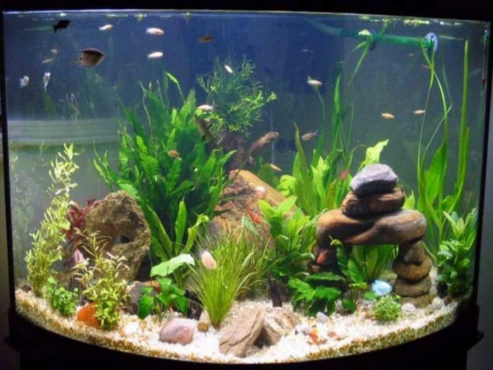Fish-Tank-Decoration-Pictureswith-the-regular-stone How to Decorate Your Boring Fish Tank