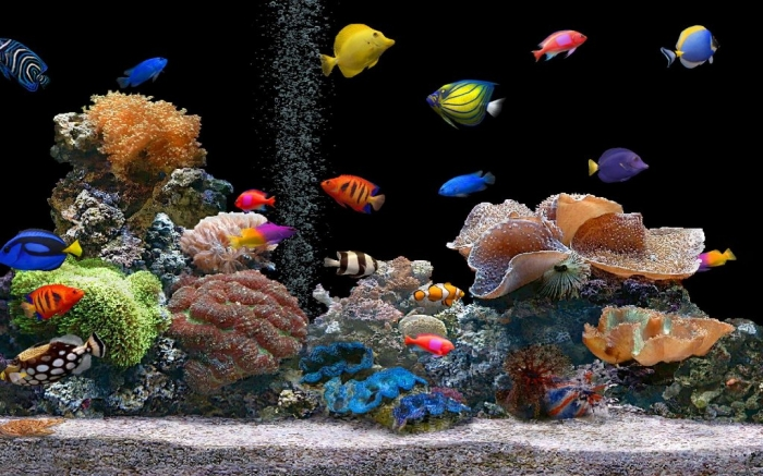 Fish-Tank What Are the Kinds of Fish You Can Put in Your Fish Tank?