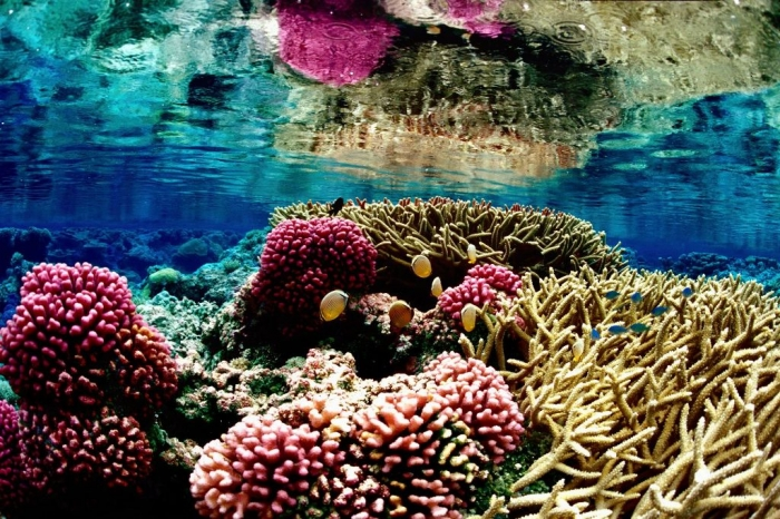 Great-Barrier-Reef-Beautiful-Coral-Australia What Is the Importance of the Magnificent Coral Reefs?