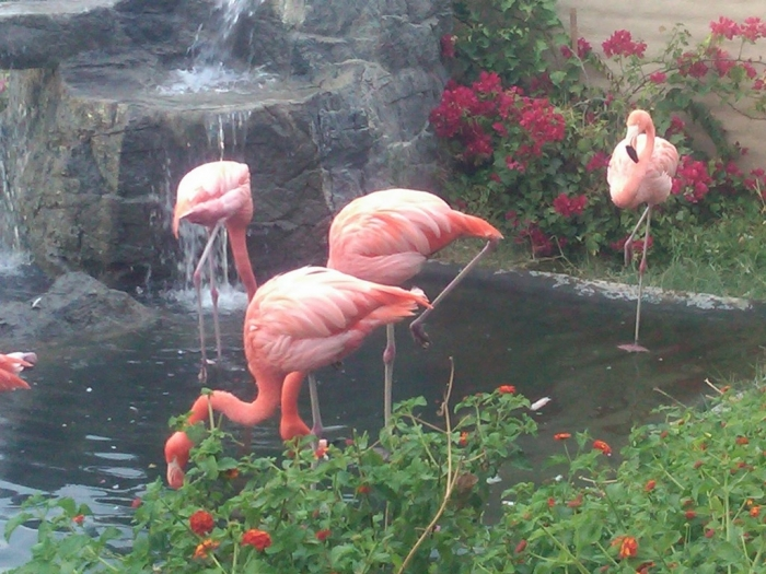 """IMG00018-20101023-18021 Strange Facts about the Most Beautiful Bird on Earth """"Flamingo"""""""