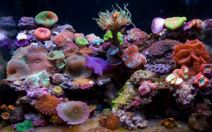 LPSFTS080913_1920 What Is the Importance of the Magnificent Coral Reefs?