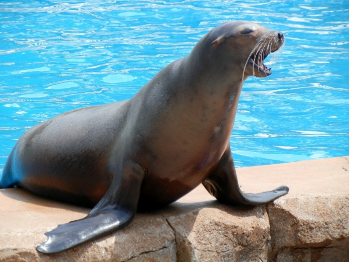 "Sea-Lion. Is It ""Sea Lions Or Sea Bears"" You Have to Decide"
