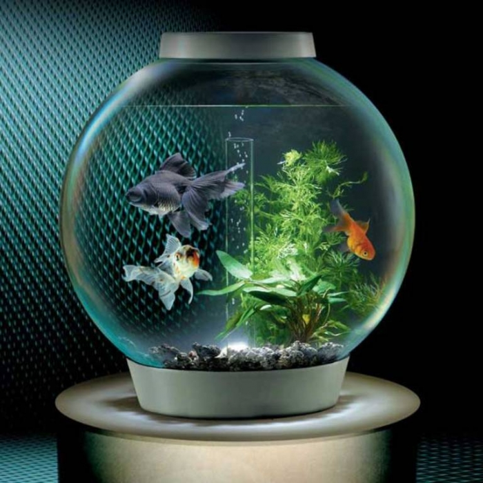 Tiny-Fish-Bowl-On-The-Table How to Decorate Your Boring Fish Tank