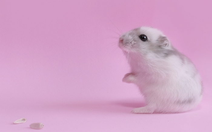White-Mouse-Animal-Wallpaper-Picture-814 Why Are the White Rats Extremely Important?