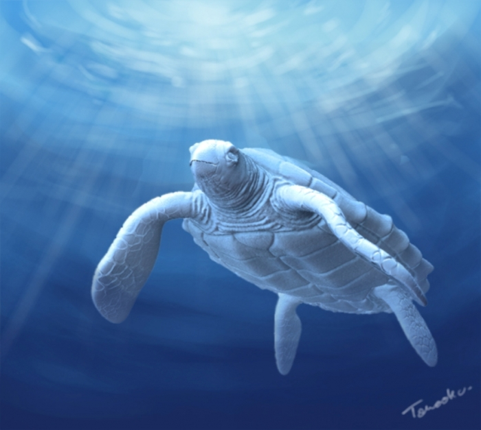 White_Turtle_by_Paniti Do the White Turtles Really Exist on Earth?