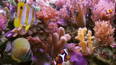 Photo of What Is the Importance of the Magnificent Coral Reefs?