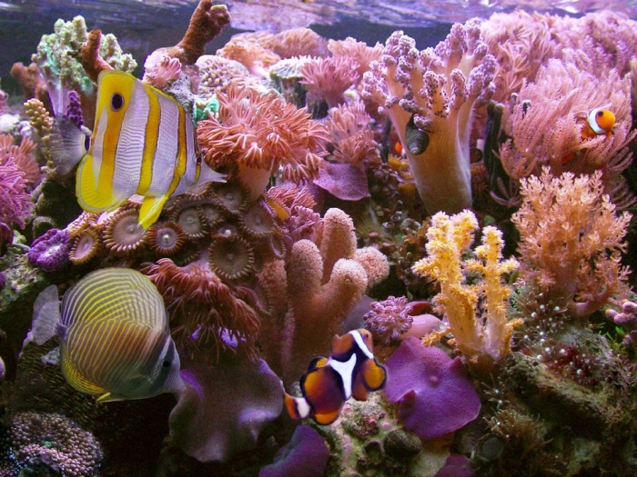 amazing-coral-reefs-1 What Is the Importance of the Magnificent Coral Reefs?