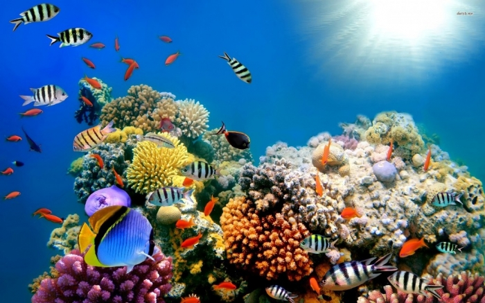 amazing-coral-reefs-6 What Is the Importance of the Magnificent Coral Reefs?