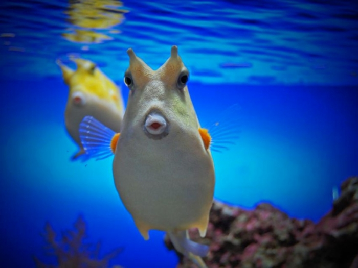 aquarium-fish-3 What Are the Kinds of Fish You Can Put in Your Fish Tank?