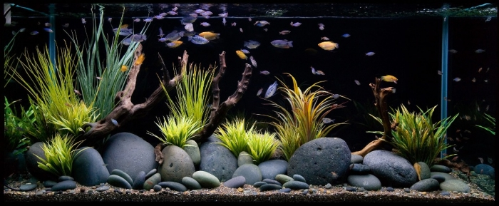 aquarium-maintenance-qlook 3 Tips to Help You Avoid Bankruptcy