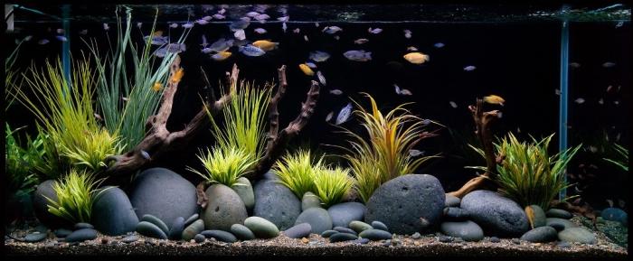 aquarium-maintenance-qlook How to Decorate Your Boring Fish Tank