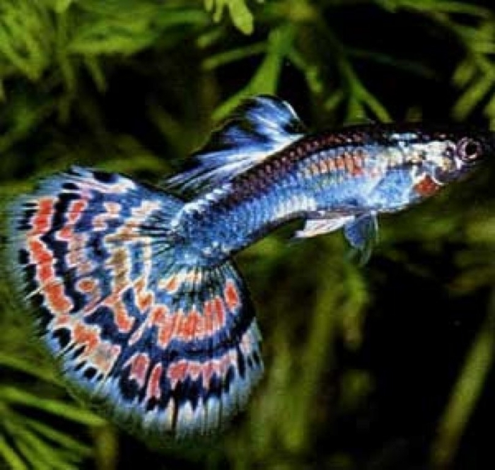 aquarium-tropical-fishes What Are the Kinds of Fish You Can Put in Your Fish Tank?