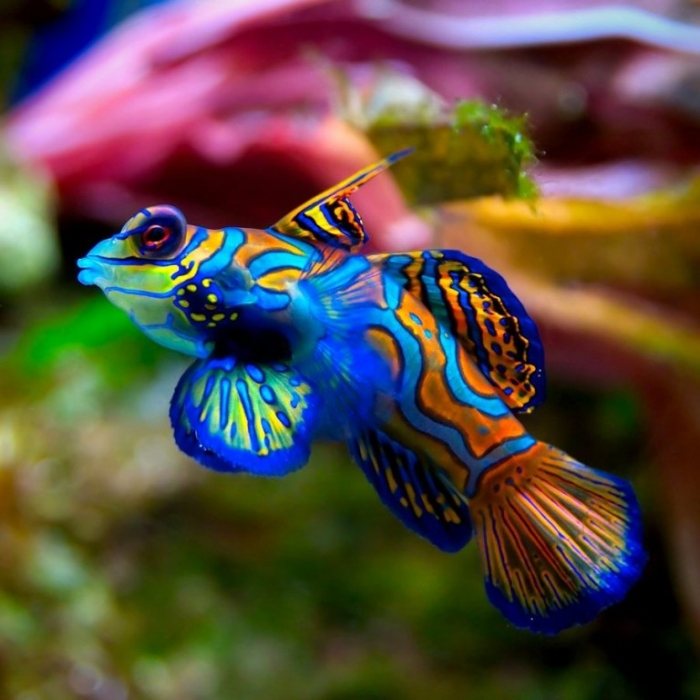 aquarium_fish_by_rifaanugrah-d5ckky9 What Are the Kinds of Fish You Can Put in Your Fish Tank?