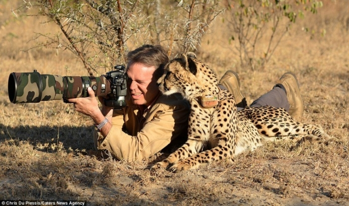 article-2538529-1A9F3D0500000578-47_964x571 Is Cheetah Going to Be Extinct & Disappear from Our Life?