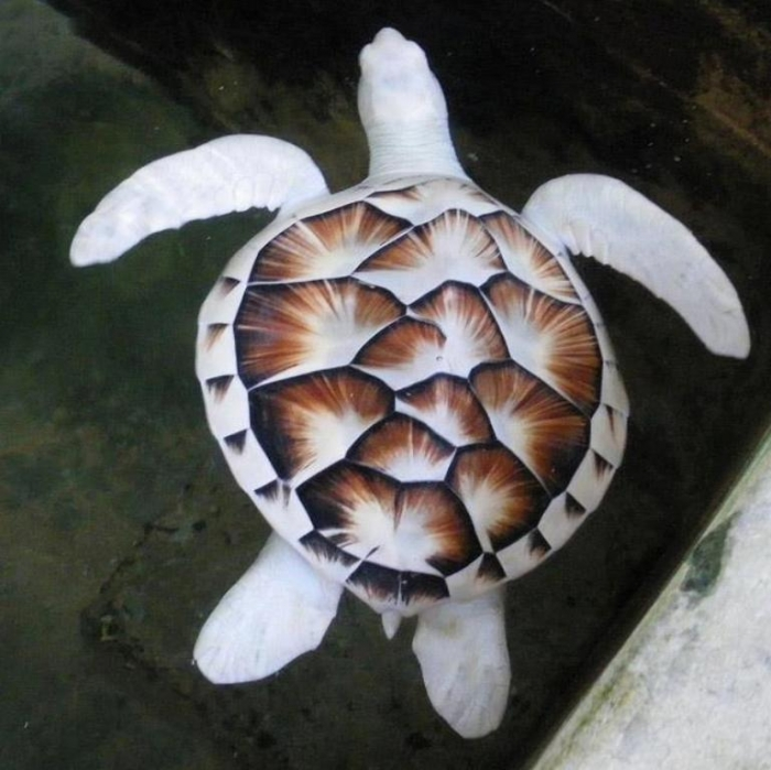 bDfIUYM Do the White Turtles Really Exist on Earth?